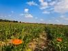 Био ферма за билки